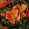 Flowers by Galeria Trompiz