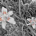 Flowers by Richard Brooke