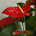 Flowers Rising by Lori Mellen-Pagliaro