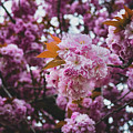 Leeds Pink Flower by Ryan Jowitt