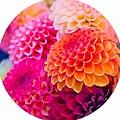 Flowers by Sarah Waldman