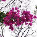 Flowers by Shivakumar  Selvaraj