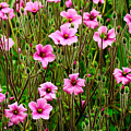 Flowers by Soon Ming Tsang