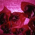 Flowers by Stefania Levi