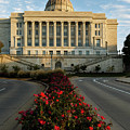 Flowers To The Capital by Terri Morris