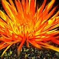 Flowersquared by Ian  MacDonald