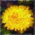 Flowery Acceptance In Abstract by Debra Lynch