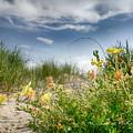 Flowery Dunes by Charles McKelroy