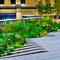 Flowery Garden On The High Line by Randy Aveille