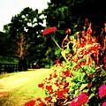 Flowery Path by Jill Tennison