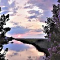 Flowery Sunset At The Aloc by Kim Bemis