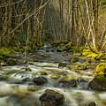 Flowing by Belinda Greb