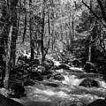Flowing Creek by Sylvia Sanchez