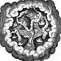 Fludds Primordial Fires, 1617 by Wellcome Images