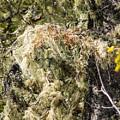 Fluff On Cedar by William Tasker