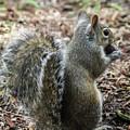 Fluffy Florida Squirrel  by Sabrina L Ryan