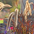 Fluffy Herbs by Valerie Dauce