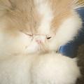 Fluffy Kitten by Ian Middleton