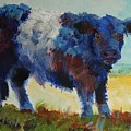 Fluffy Shaggy Belted Galloway Cow - Cow With A White Stripe by Mike Jory