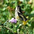 Flutter By 102110 by David Lane