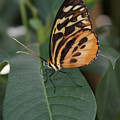 Flutter-by by Brian Anderson