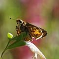 Flutter by Donna Blackhall