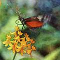 Fluttering 8234 Idp_3 by Steven Ward