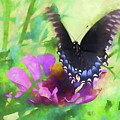 Fluttering Wings Of The Butterfly by Scott Cameron