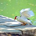 Fly Away Duck by Tyeshia Barnes