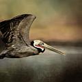 Fly Away Home by Stevie Benintende