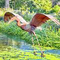 Fly Away by Paul Kukuk
