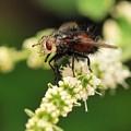 Fly Beauty by Michelle DiGuardi
