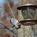 Fly Birds 326 by Lawrence Hess