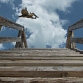 Fly By At The Beach - Brown Pelican And Rustic Stairs by Mitch Spence