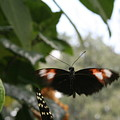 Fly Free - Black, Orange, White Butterfly by Lynn Michelle