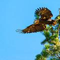 Fly Like An Eagle by Dennis Bolton
