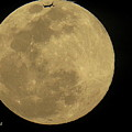 Fly Me To The Moon  by Karen Baltzell