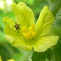 Fly On Flower by Angi Nagel