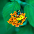 Fly On Flower by Totto Ponce