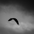 Fly With The Spirit Of The Eagle by Ella Kaye Dickey