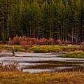 Flyfishing In Stream by Rick Strobaugh