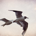 Flying by Angela Doelling AD DESIGN Photo and PhotoArt
