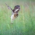 Flying Baby Burrowing Owl by Judi Dressler