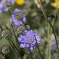 Flying Bee 2. by Les OGorman