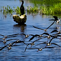 Flying Birds by Galeria Trompiz