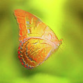 Flying Butterfly On Decorative Background, Graphic Design. by Jozef Klopacka