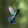 Flying Emerald by Heiko Koehrer-Wagner