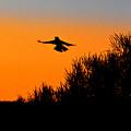Flying Free In Northen Beaches by Miroslava Jurcik