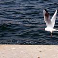 Flying Free  by Munir Alawi