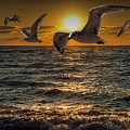 Flying Gulls At Sunset by Randall Nyhof